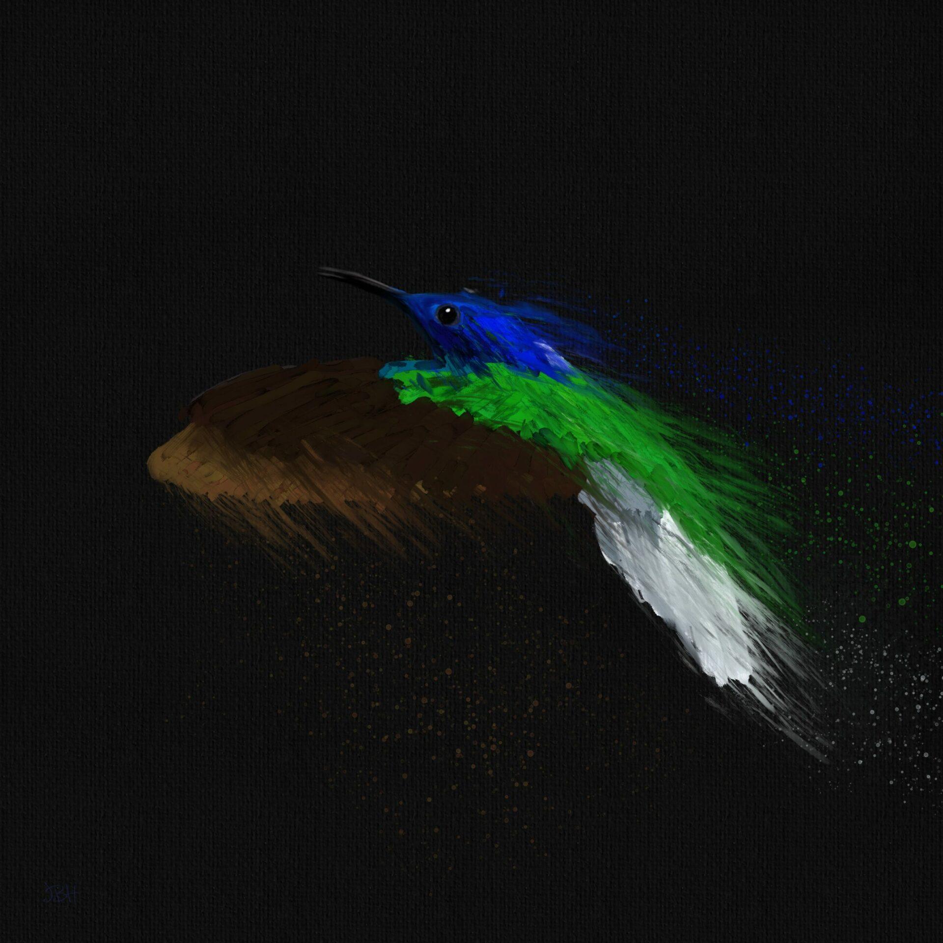 Hummingbird_aps