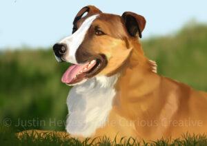 Amos Pet Portrait