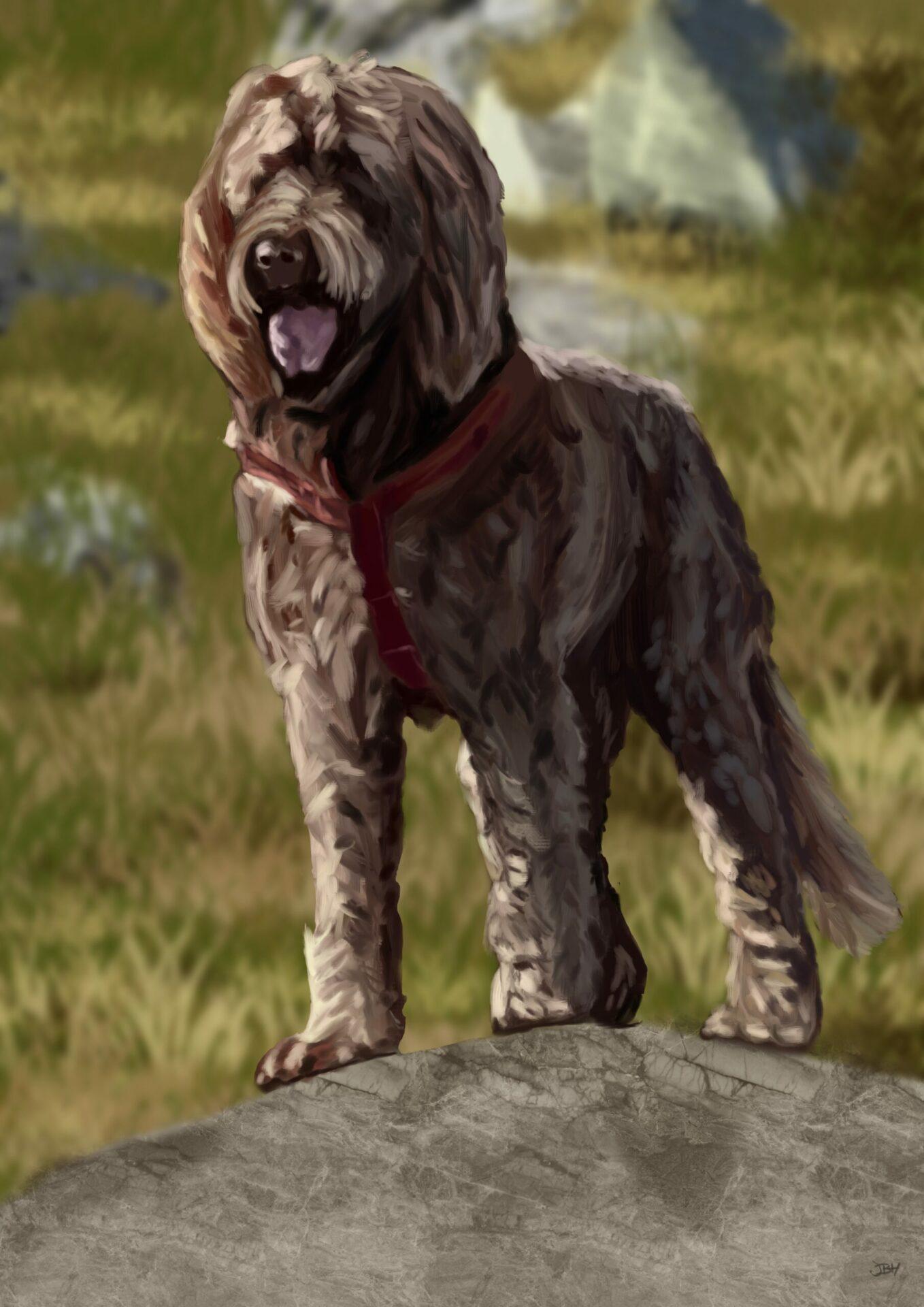Frankie pet portrait