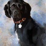 a pet portrait of Bonnie the sprocker