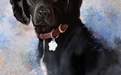 New Pet Portrait – Bonnie the Sprocker