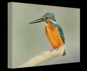 KIngfisher on canvas product image